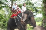 I went even to ride an Elephant summer holiday Krabi 2009