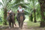 With hubby, Skye, Amani & Malaika on Elephants