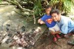 Somewhere near Krabi, fish farm