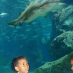 Paragon Aquarium