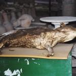 Wanyama nao walikutwa hivi