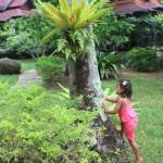 Sunrise Resort garden in Krabi, Thailand