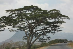 Mwanza 2011 (Mwanza Trip. Aug, 2011)
