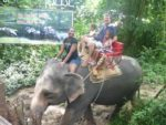 An Elephant ride with my family