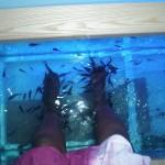 at Fish Spa