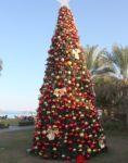 Beautiful Xmas Tree