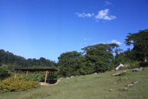 Dar 2012 (Swiss Farm Cottage Lushoto, Tanzania Part 2)