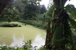 Lushoto 2012 (Lushoto, Tanzania. Mar 2012, Part 3)