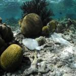 Snorkelling at Bonaire