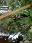 @butterfly farm