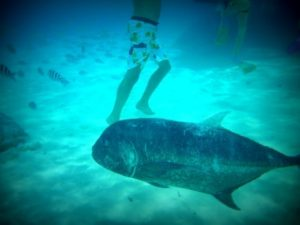 Snorkling with big fish